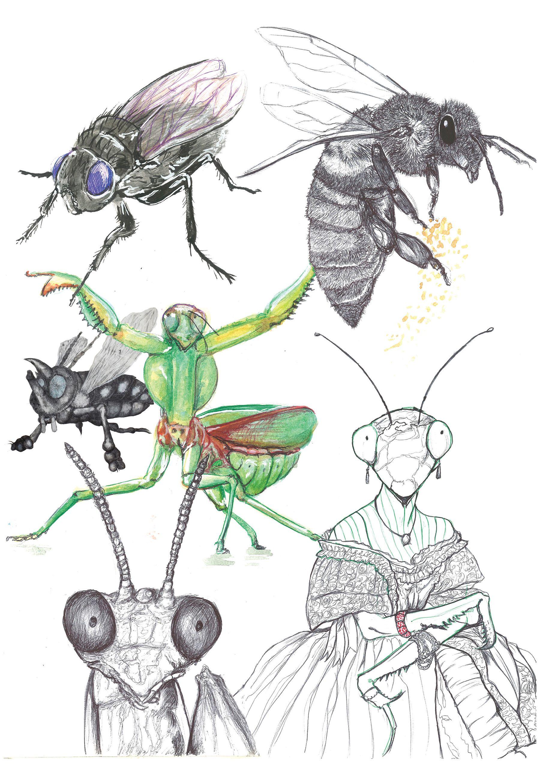Etudes d'insectes