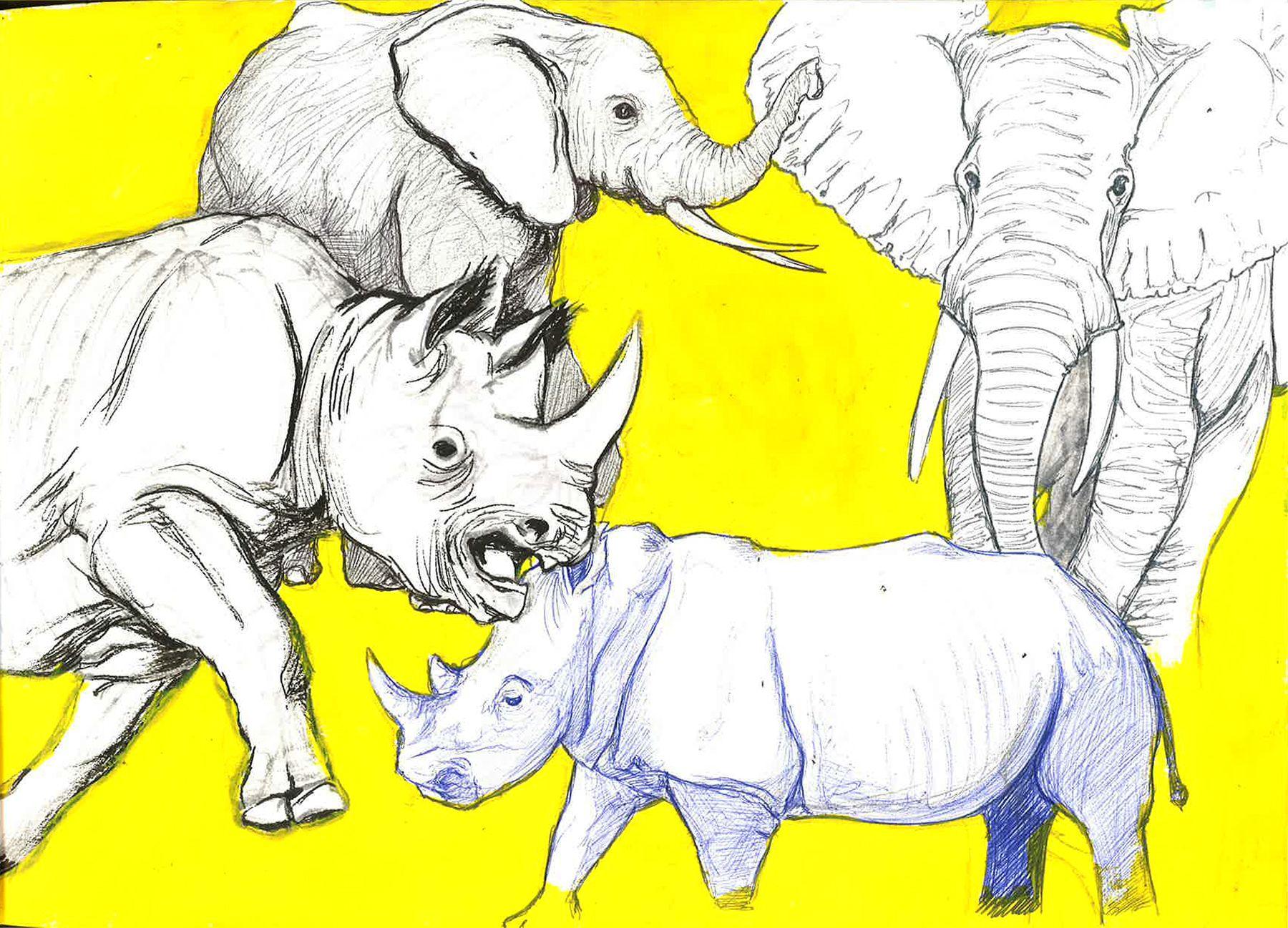 Esquisses d'éléphants et de rhinocéros