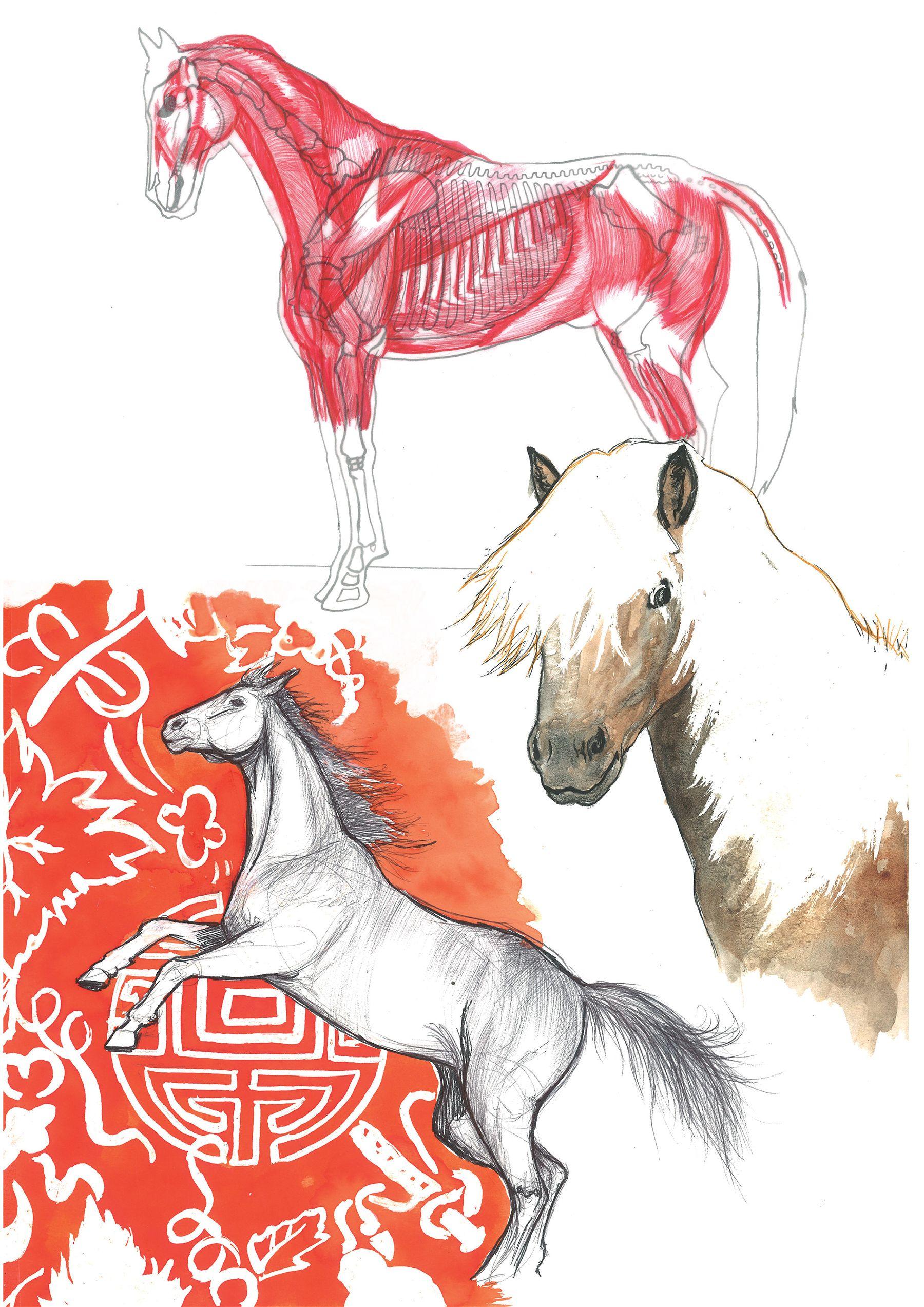 Analyse de l'anatomie d'un cheval
