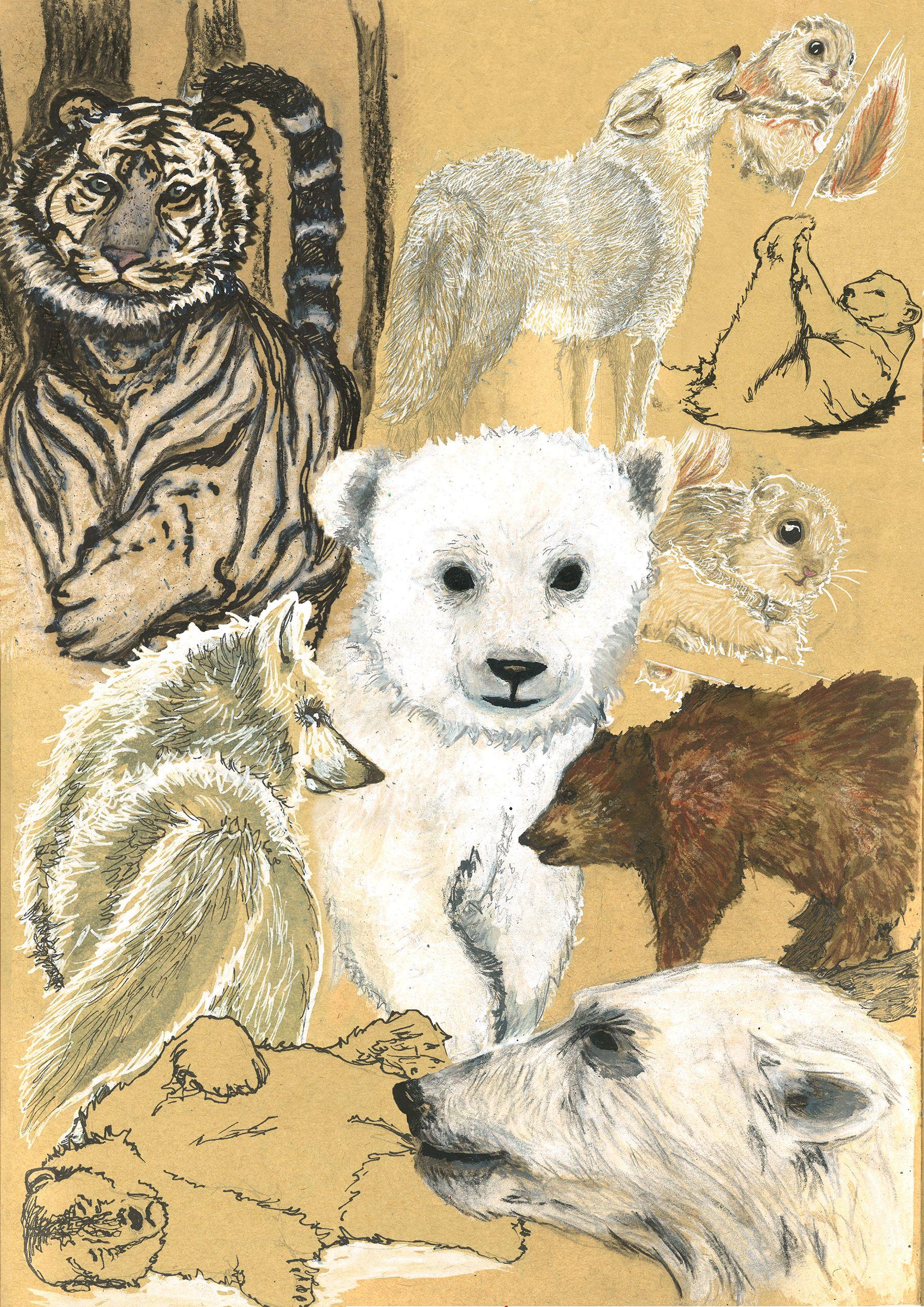 Croquis d'animaux de Sibérie