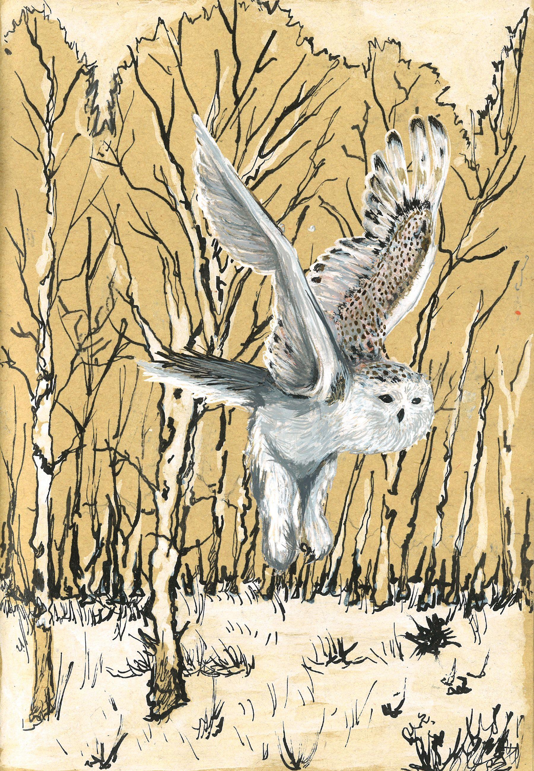 Illustration d'une chouette de Sibérie